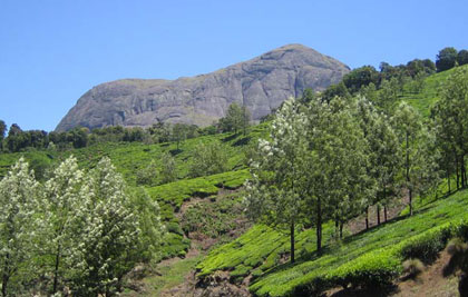 Munnar is located in the Western Ghat Mountain Range
